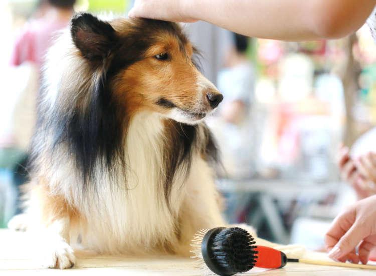 もっと快適に冬を過ごそう! ショップスタッフに聞く、愛犬の冬のお世話とケアアイテム