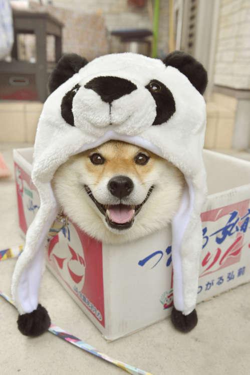 きゃはっ♪ パンダに変身~