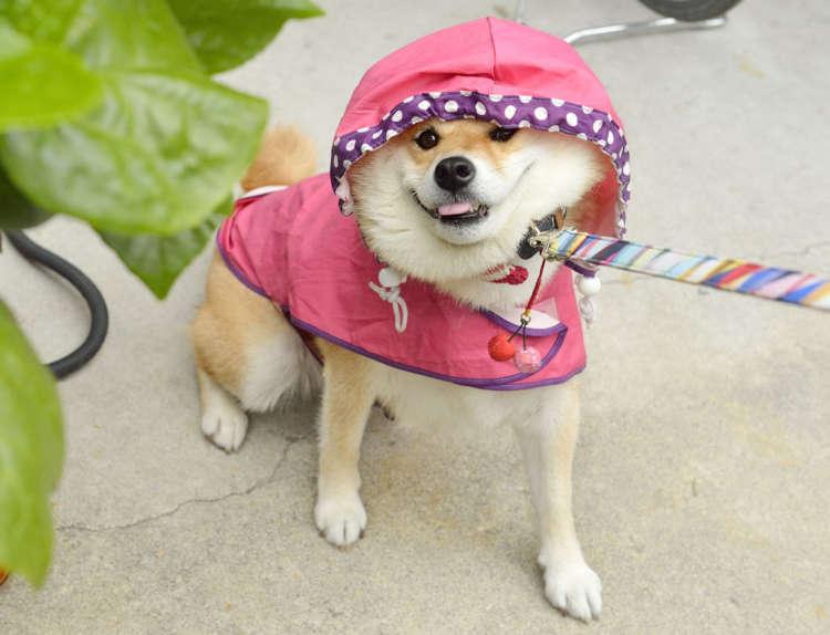 雨の日は行かないよ!!
