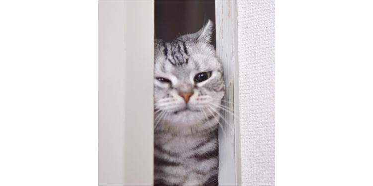 朝になるとやって来る♪ お顔で『むにゅむにゅ』と扉を開けるニャンコ。朝の挨拶がかわいすぎる…♡