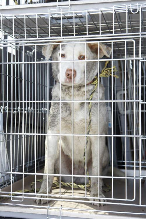 保護犬の譲渡会は意外にも家族連れが多く訪れていた