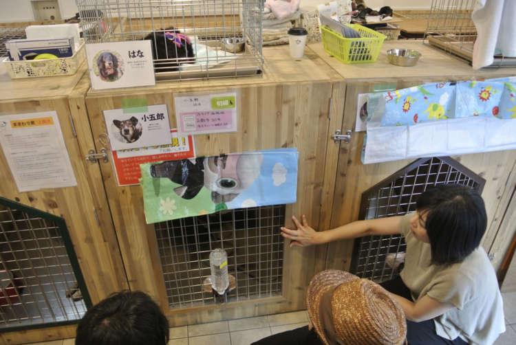 譲渡希望者にボランティア・スタッフは犬の性格などの説明をする。