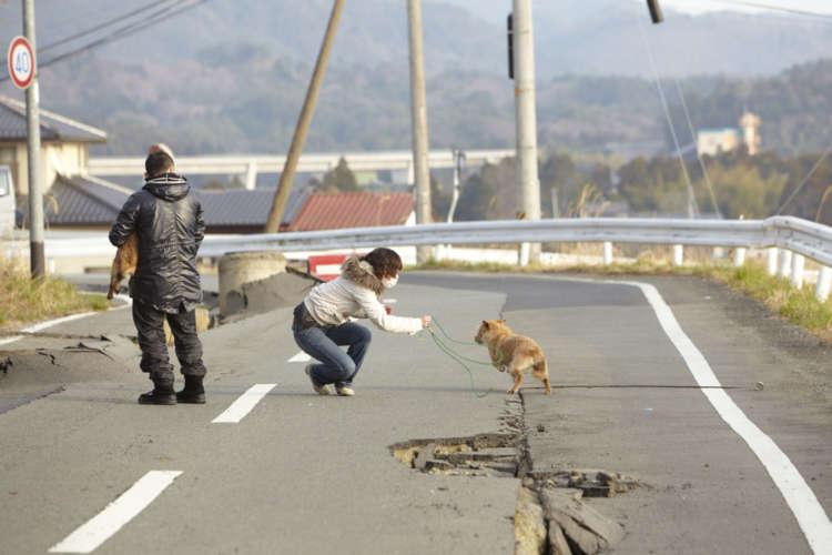 人の姿がない被災地で、さまよっている犬を捕獲する友森さん。想像以上に体力の必要な作業である。