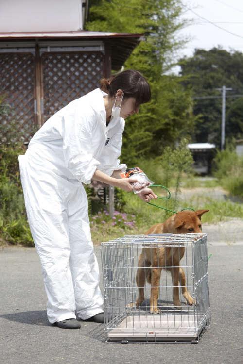 例えば、出発前に『中型犬以上の預かりボランティアが可能な方は応募ください』と書き込み、行きの車の中でチェックするともうすでに多くの申し込みが入っている。