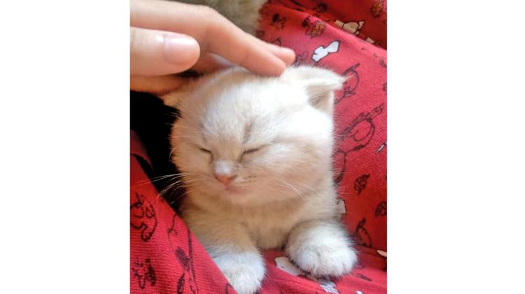 腕の中で眠る子猫♪ → でもこの直後「わたしも!」と、かわいい乱入者がやって来て…♡