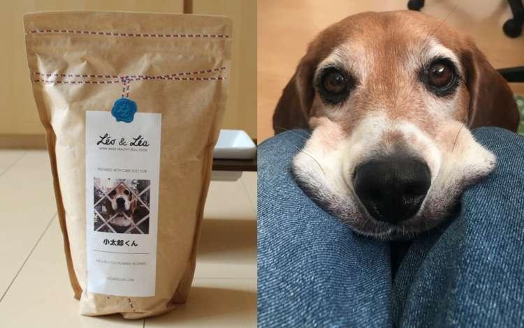 PECOのアイドル犬も大満足! レオ&レアで愛犬に最適なフードを