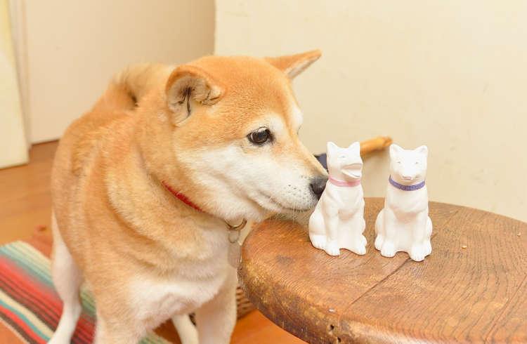 この『番犬』たちの「あ!」の天真爛漫さ、「うん」の冷静で賢そうな感じ、こんな2匹が自分の周りにいてくれたら、最高です。