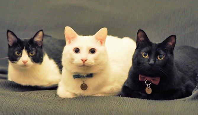 【問題ないニャ】猫たちの様子を心配した飼い主さんがリビングに向かうと… みんなで香箱座りしていた♡