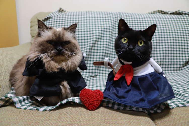 バレンタインはPetioのコスプレで着飾ろう♪