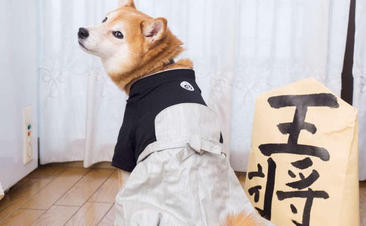 【飼い主攻略には欠かせない】柴犬式 次の一手