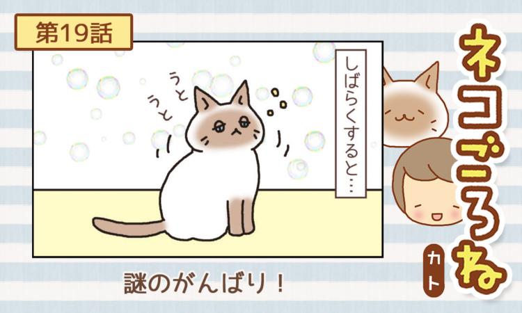【まんが】第19話:【謎のがんばり!】まんが描き下ろし連載♪ ネコごろね(著者:カト)