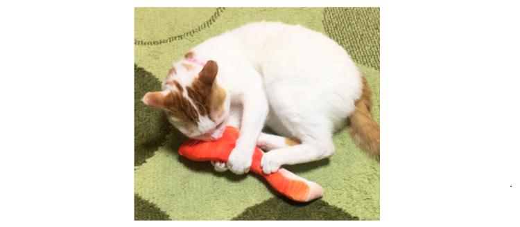 【誰にも渡さニャい!】魚の切り身のおもちゃをGetしたニャンコ♪ 夢中でケリケリする様子が…♡