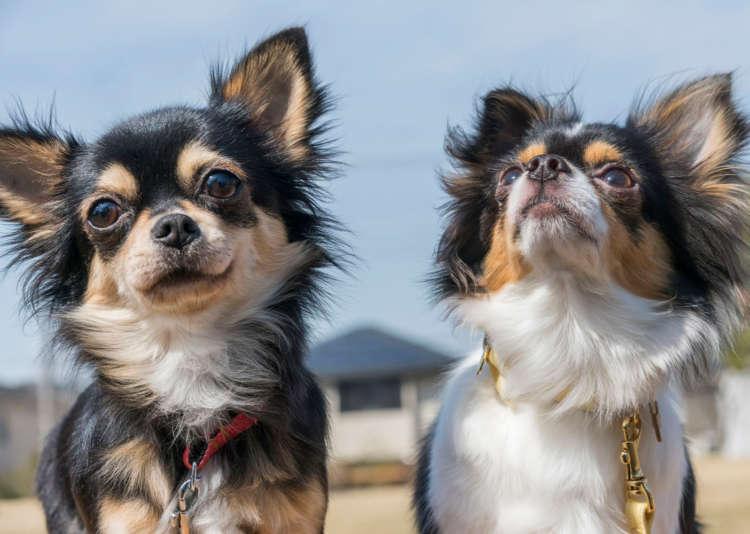 Q 犬種や性格によって出やすさに違いはあるの?