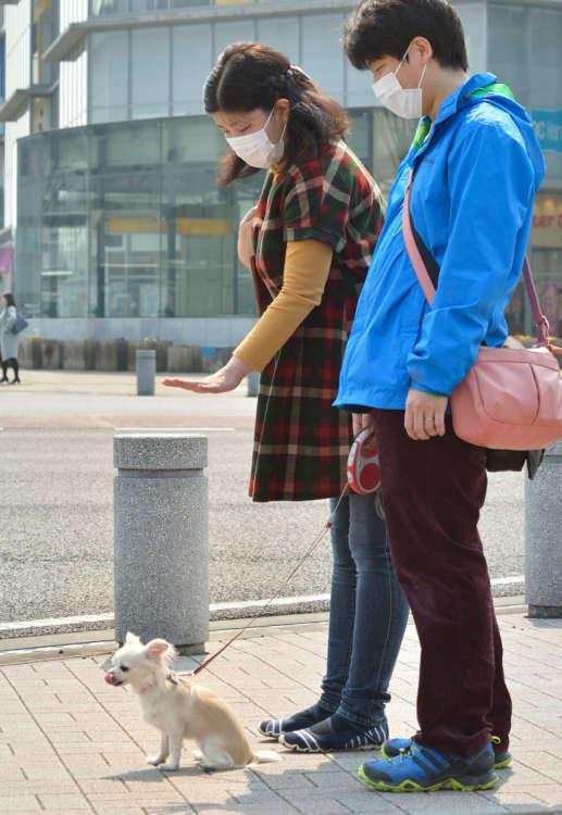 横断歩道でオスワリ