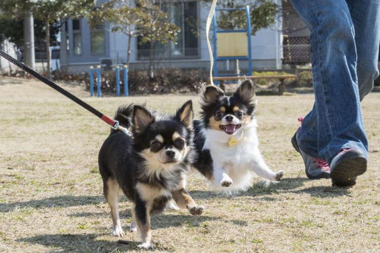 遊びに来た加藤さんの妹・優理亜さんの愛犬アニモ(メス・1歳)とダッシュ!