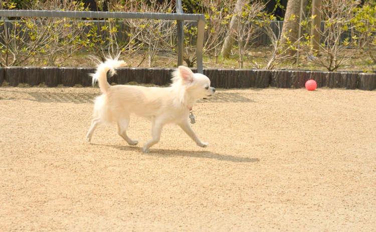 友達犬と一緒なら安心して遊べる