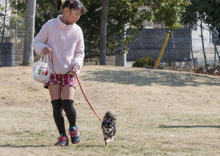 散歩デビューには、見晴らしがよい広場がおすすめ。人や犬が少ない10時〜14時頃に出かけて練習してみよう。