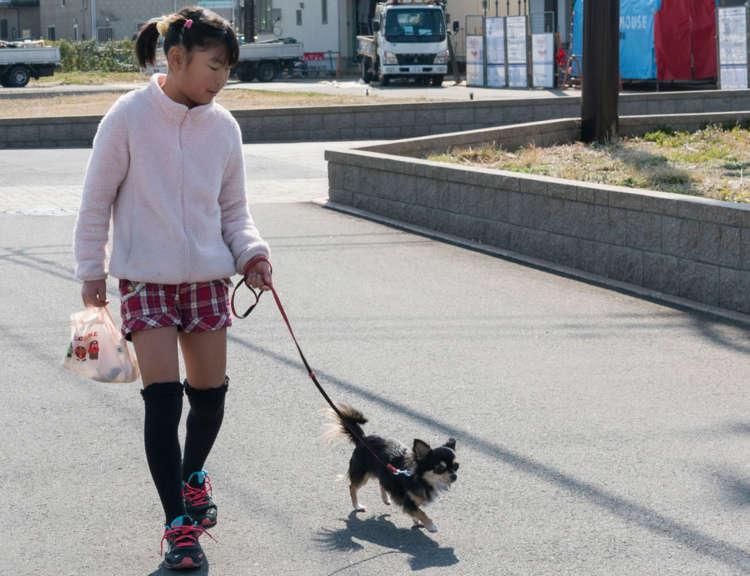 最初は近所を歩いてみて……と思いがちだが、住宅街は見通しが悪く、予想外の刺激に遭遇することも。散歩デビューには不向き。