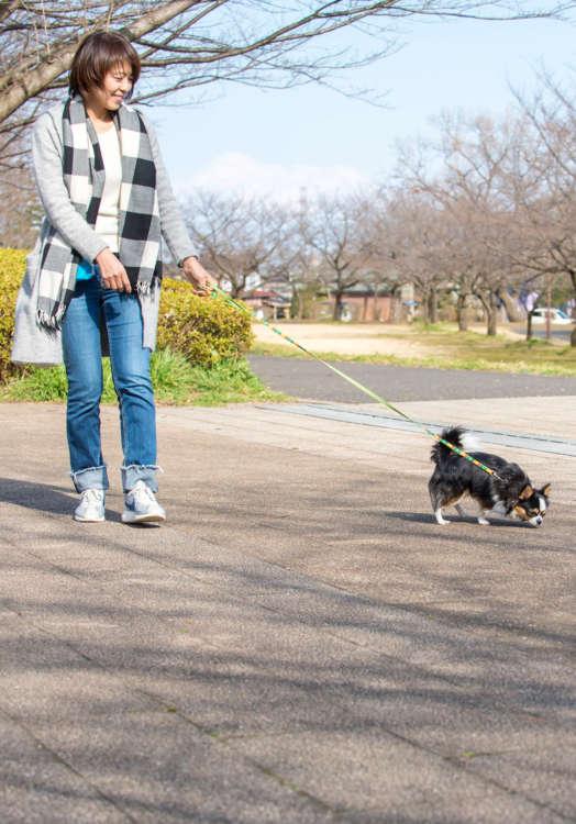 好奇心を持って周辺を探索するために歩き出したら、最初は犬に任せてついて行こう。