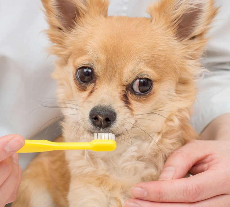 歯ブラシに慣れてもらう