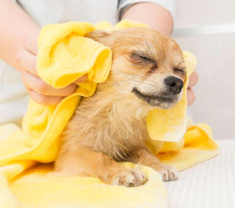 つい忘れがちな耳周辺。よく乾かさないと毛玉ができやすくなるので、耳の中と同様、耳の裏側もタオルでしっかり拭こう。