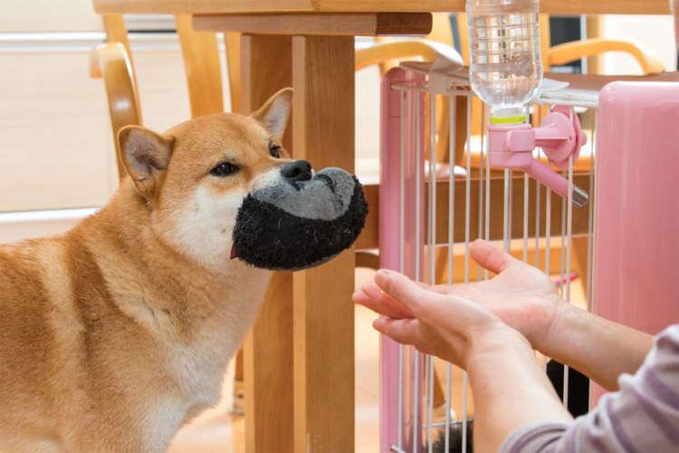 飼い主の緊張が犬にも伝わってしまうって本当?
