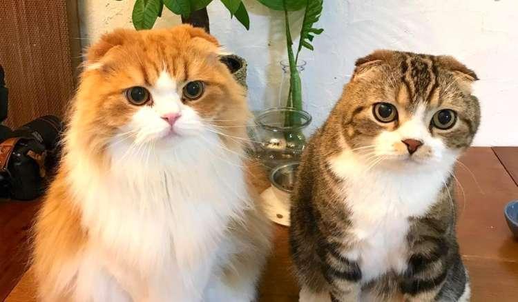 『猫らしからぬ』面をもった、うずら&タラちゃん! 2匹とのドタバタなキャットライフに… キュン♡