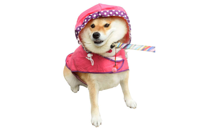 雨の日は休もうよ~