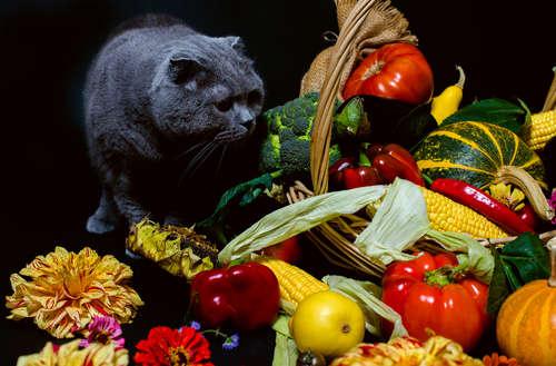 【獣医師監修】猫にブロッコリーを与えても大丈夫? ブロッコリーのメリットや注意点