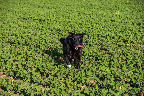 【獣医師監修】犬に枝豆を与えても大丈夫? 犬に枝豆を与える際の注意点
