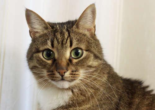 猫に立ち入り禁止の場所を教えたい!  効果的なしつけの方法と注意点