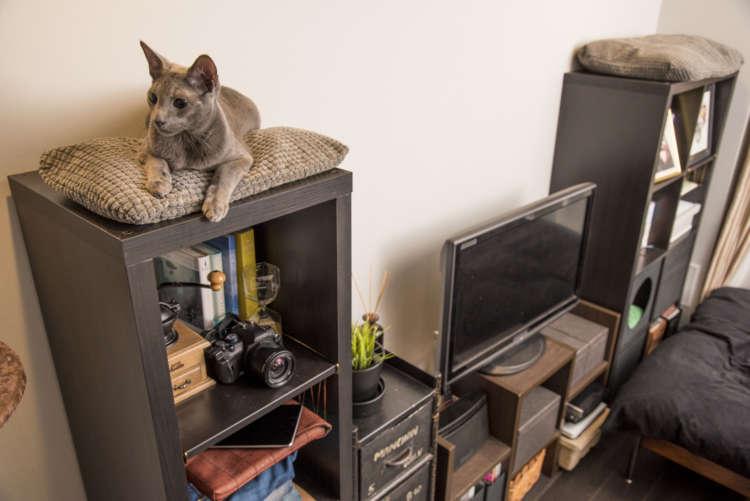 棚の上も遊べてくつろげる大切なスペースに