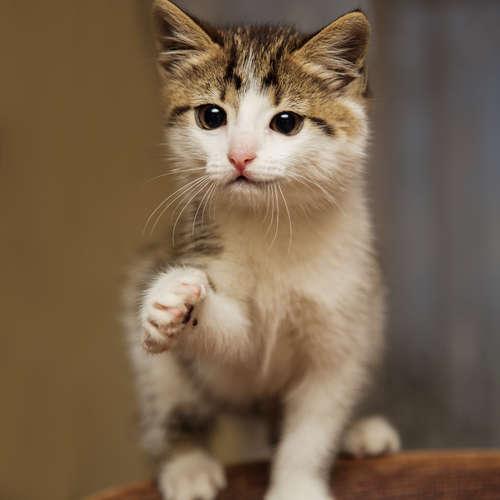 猫にカニを与えてはいけません!  その理由と口にしてしまった時の対処法