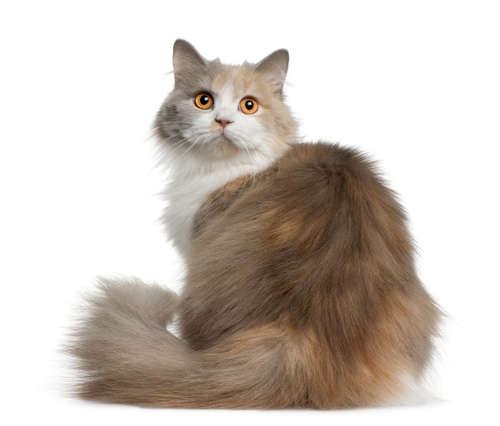 猫の脱肛 考えられる原因や症状、治療法と予防法