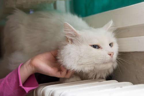 猫の低体温は要注意。考えられる病気と対策