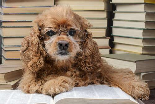 犬の年齢、人間でいうと何歳?  老いのサインについても解説