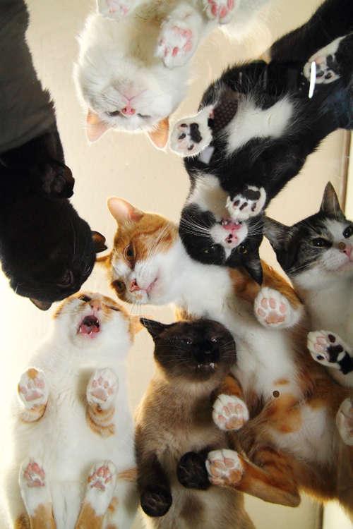 """室内で過ごす休日に♡ 今注目の可愛い&ちょっぴり変わった""""猫の本""""を紹介!"""
