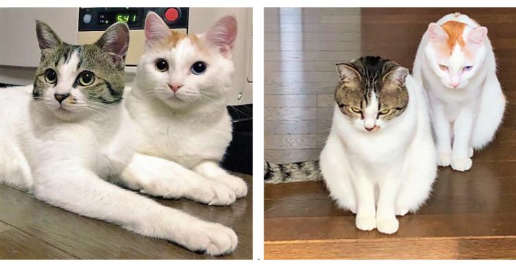 あどけない表情が一変! 飼い主さんをお見送りする、猫たちの表情が…(; ・`д・´)