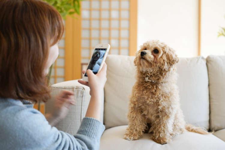 スタンプも作れる犬が主役のSNS「クンカブル」で愛犬を自慢しちゃおう!