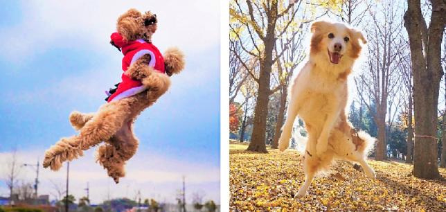 ウッキウキ気分で元気よくジャンプするワンコたち♪ 思わず一緒に、『ぴょーんっ!』したくなる写真集♡