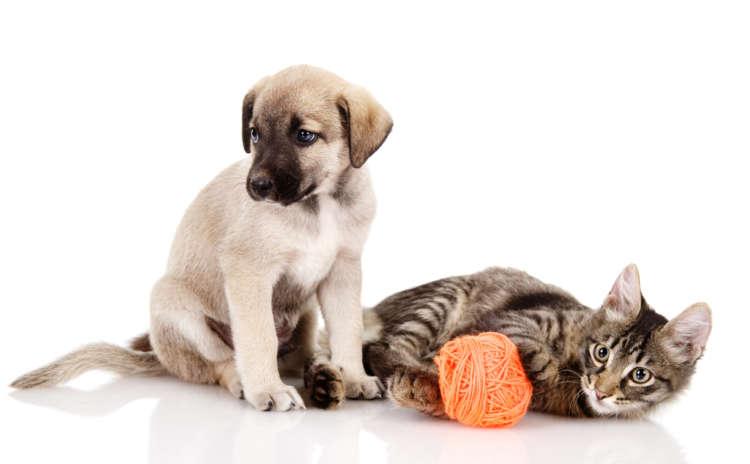 犬・猫の誤飲を防ぐ! 獣医師が教えてくれた注意したいポイント