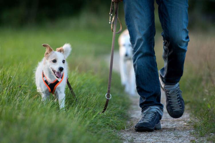 愛犬とのお散歩に欠かせない! 揃えておきたい初心者向けグッズ
