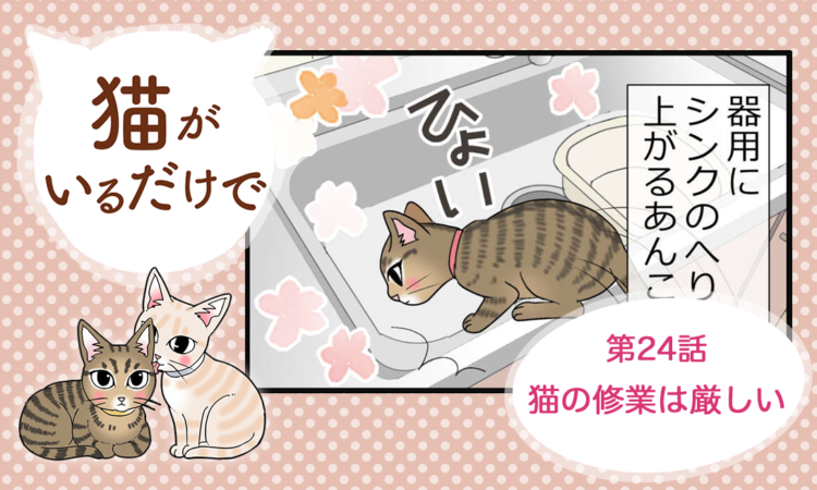 第24話:猫の修業は厳しい