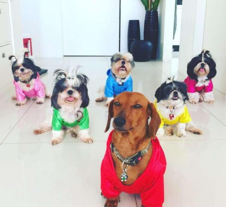 【かわいすぎる集合写真♡】5匹のシーズーと1匹のダックスが暮らす大家族! 全員が集まると…♡