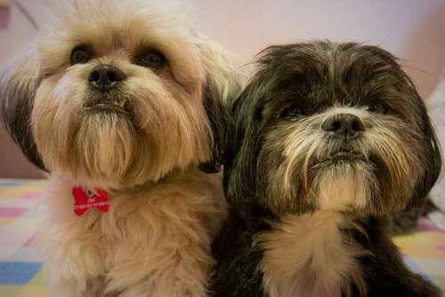 【獣医師監修】犬のためのおやつ選び! 無添加のおやつを与えるメリット