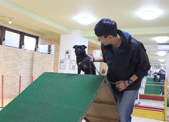 【花梅トライ! トライ!!】愛犬と飼い主が一緒に楽しむ、ドッグスポーツ「エクストリーム」とは!?