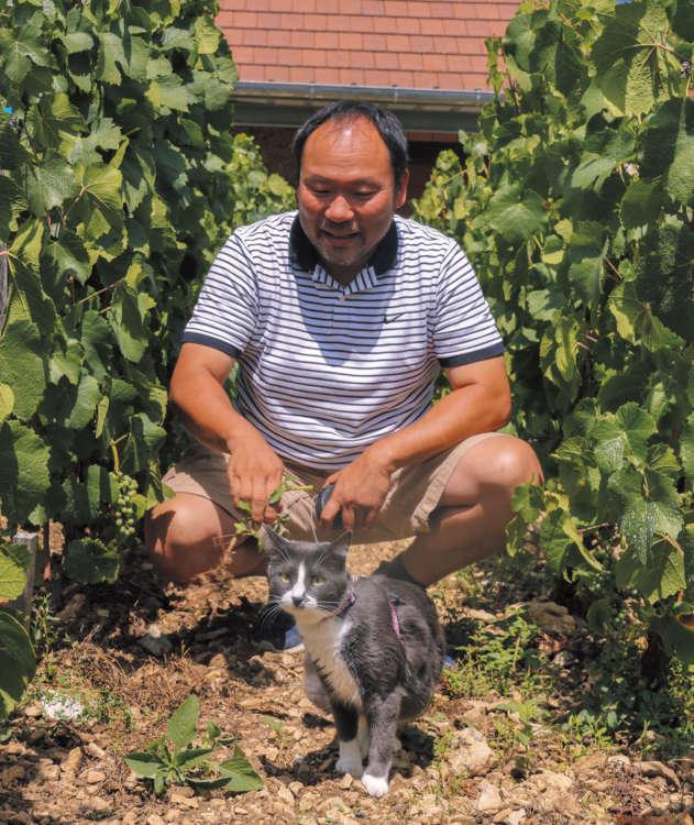 オーガニックのブドウ畑は、環境にも人にも猫にも優しい