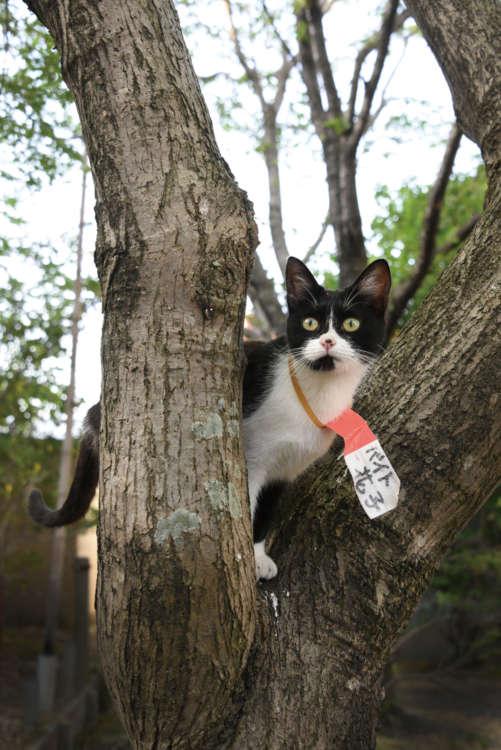 境内の木に登りパトロール。胸元の名札に注目!
