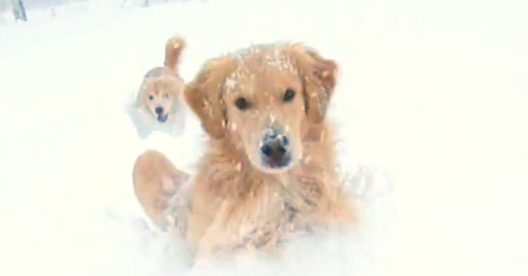 【雪まみれで大はしゃぎ!】雪をかき分けて進むワンコたちが、とっても楽しそう(*´艸`*)