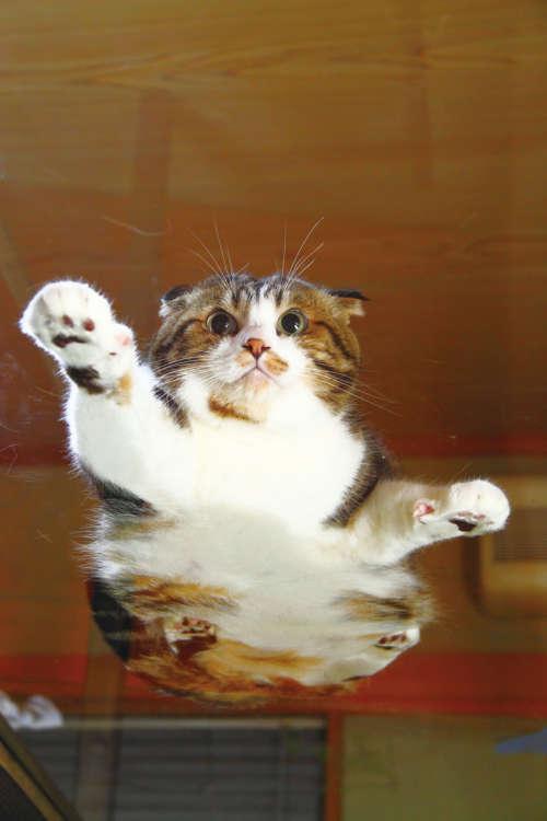 空飛ぶネコは存在した!?